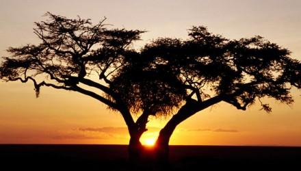 africa01
